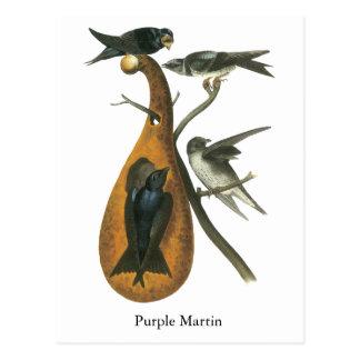 Purple Martin, John Audobon Postcard