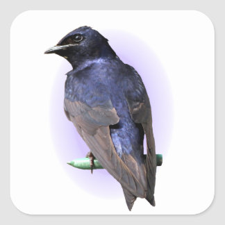 Purple Martin Male Square Sticker