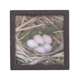 Purple Martin Nest - Secret Box