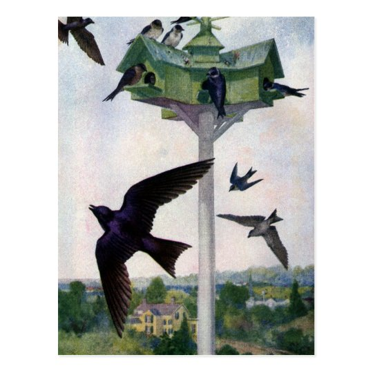 Purple Martins and Their Birdhouse Postcard