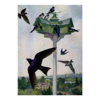 Purple Martins and Their Birdhouse Poster