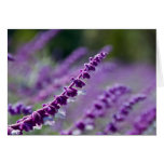 Purple Mexican Sage Cards