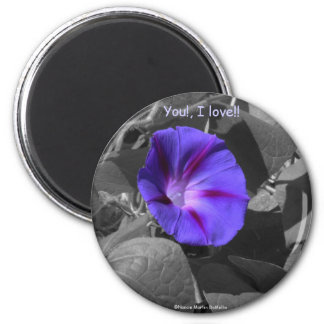 Purple Morning Glory-Magnet Magnet