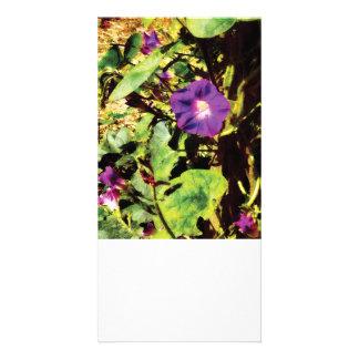 Purple Morning Glory Photo Cards
