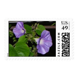 Purple Morning Glory Postage Stamp