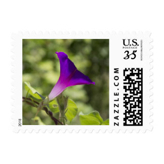 Purple Morning Glory Postage Stamps