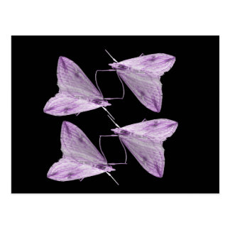 Purple Moth Art Postcard