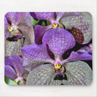 Purple moth orchid flowers in full bloom mouse pad