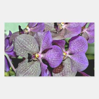 Purple moth orchid flowers in full bloom rectangular sticker