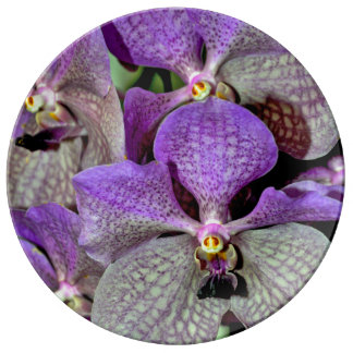 Purple moth orchid flowers porcelain plate