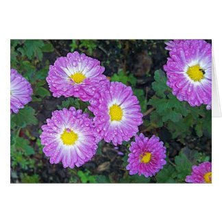 Purple Mums Frozed in Time Card
