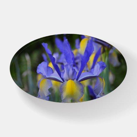 Purple N Yellow Iris Paperweight