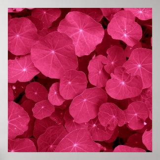 Purple nasturtium leaf II Poster