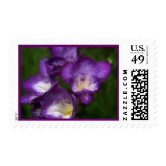 Purple on Canvas Postage