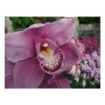 Purple Orchid and Garden Colorful Floral Photo Print