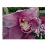 Purple Orchid and Garden Colorful Floral Postcard