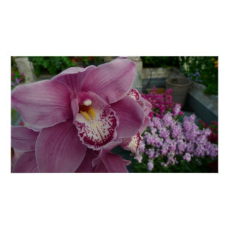 Purple Orchid and Garden Colorful Floral Poster