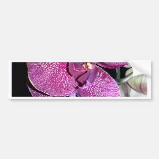 Purple Orchid Bumper Sticker