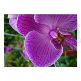 Purple Orchid Card