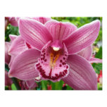 Purple Orchid Elegant Floral Photo