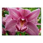 Purple Orchid Elegant Floral Photo Card