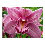 Purple Orchid Elegant Floral Photo Postcard