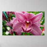 Purple Orchid Elegant Floral Photo Poster
