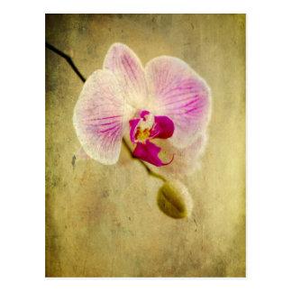Purple Orchid Floral Flower Aged Antique Postcard