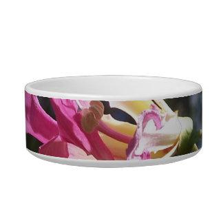 Purple orchid flower tree n sky rock background pet bowls