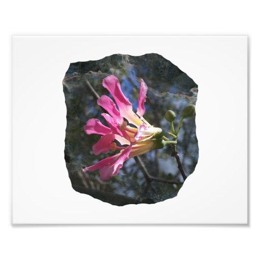 Purple orchid flower tree n sky rock background photo print