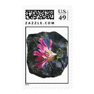 Purple orchid flower tree n sky rock background postage