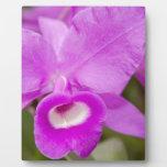 Purple Orchid Placa De Plastico