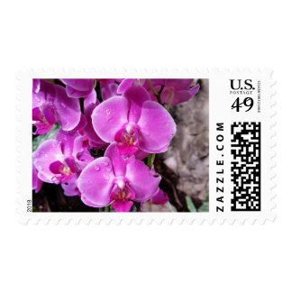 Purple Orchid Postage Stamps