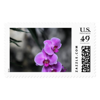Purple Orchid Stamps