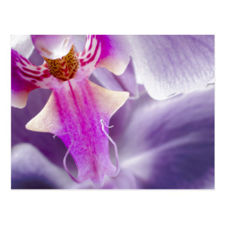Purple Orchid Post Cards