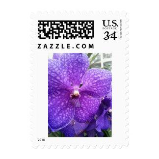 Purple Orchid Postcard Postage