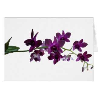purple orchid spray greeting card