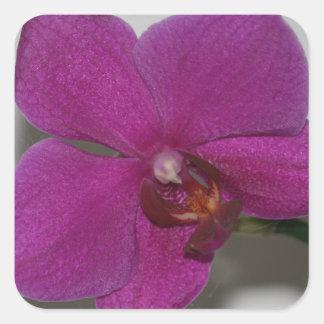 Purple Orchid Square Sticker