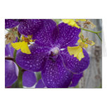 Purple Orchid Stationery Note Card