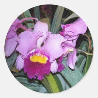 Purple Orchid Classic Round Sticker