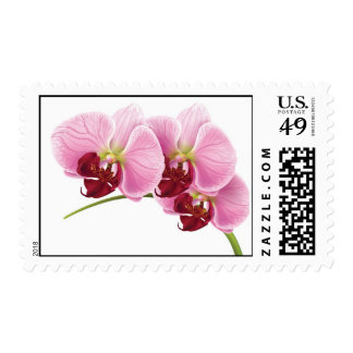 Purple Orchid Wedding Postage Stamps