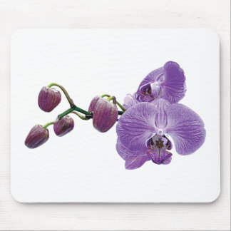 Purple Orchid With Buds Mouse Pad