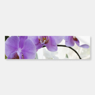 Purple Orchids on a Vine Bumper Sticker