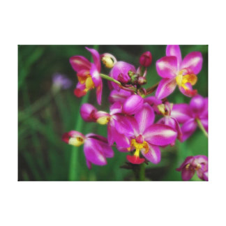 Purple orchids Photo Gallery Wrapped Canvas