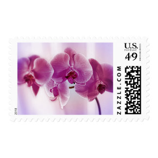 Purple Orchids Stamps
