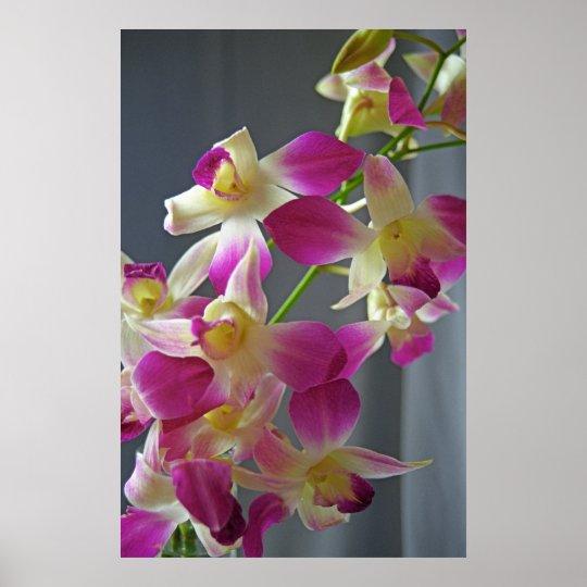 Purple Orchids Poster Print