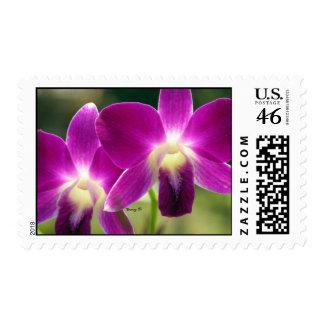 Purple orchids stamp