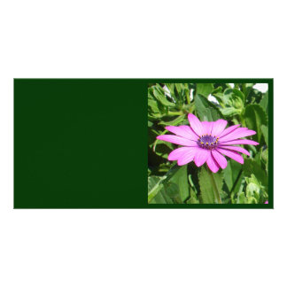 Purple Osteospermum Against Green Leaves Card