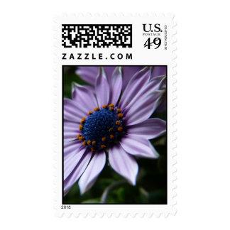 """""""Purple Osteospermum flower"""" Osteospermum Ecklonis Stamps"""