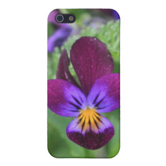 Purple Pansie 4/4s  iPhone SE/5/5s Cover